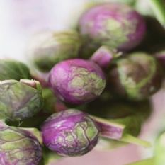 Brussels Sprout Red Ball - Appx 75 Seeds